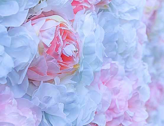 Blumenwand XXL mieten in Berlin, Fotowand mieten, Hochzeitsdeko mieten Berlin, Hochzeit mieten, Rund um Ihre Hochzeit in Berlin